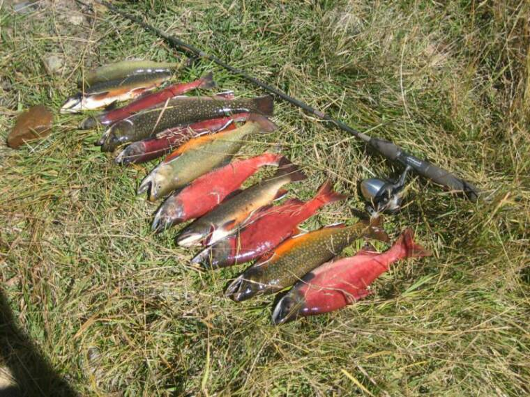 Fishing high savery reservoir high savery fish species for Colorado fish species